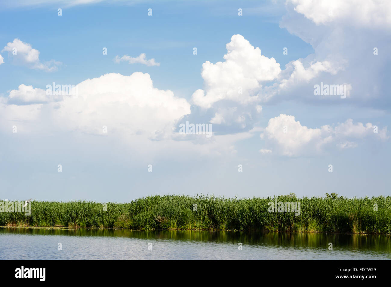 Blue skies with clouds above the water, river bulrush - Stock Image