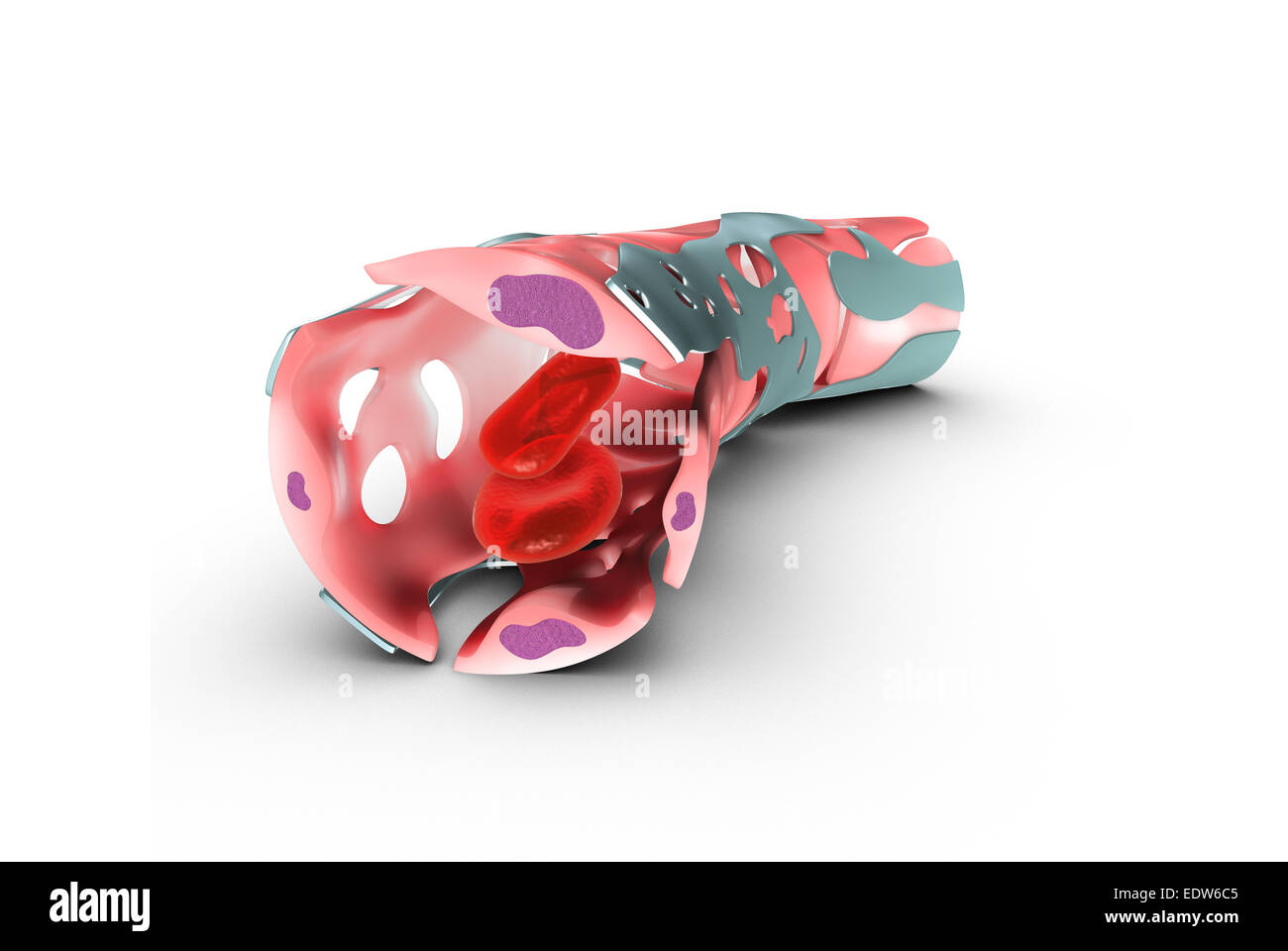 Blood Capillaries Stock Photo 77385845 Alamy