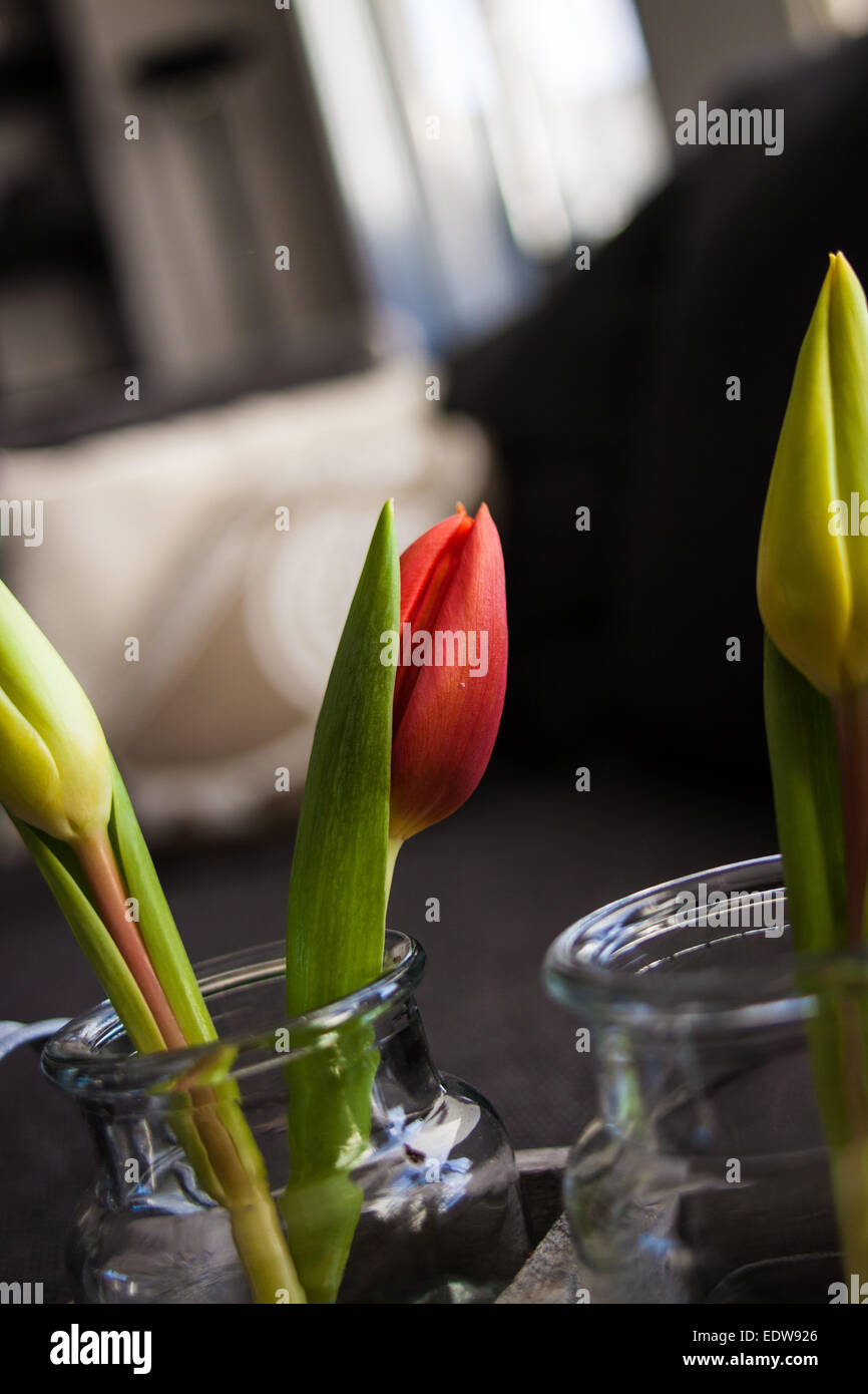 Tulips in a vase in a livingroom - Stock Image