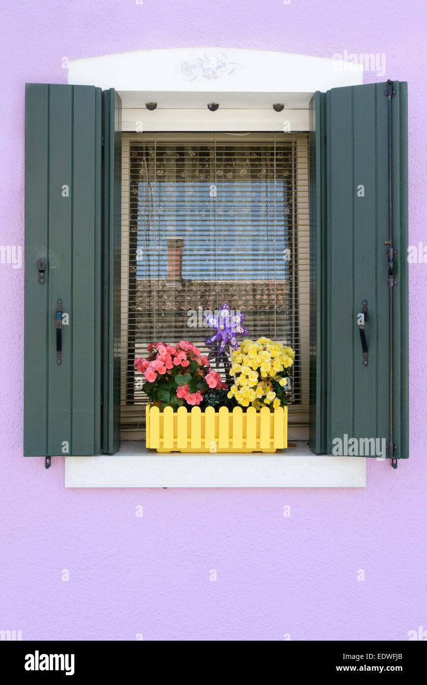 Colour contrasts in this typical Burano window and window box - Burano is a colourful  Italian island village / - Stock Image
