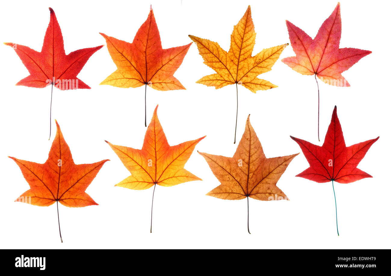 Autumn leaves, collage, Stock Photo
