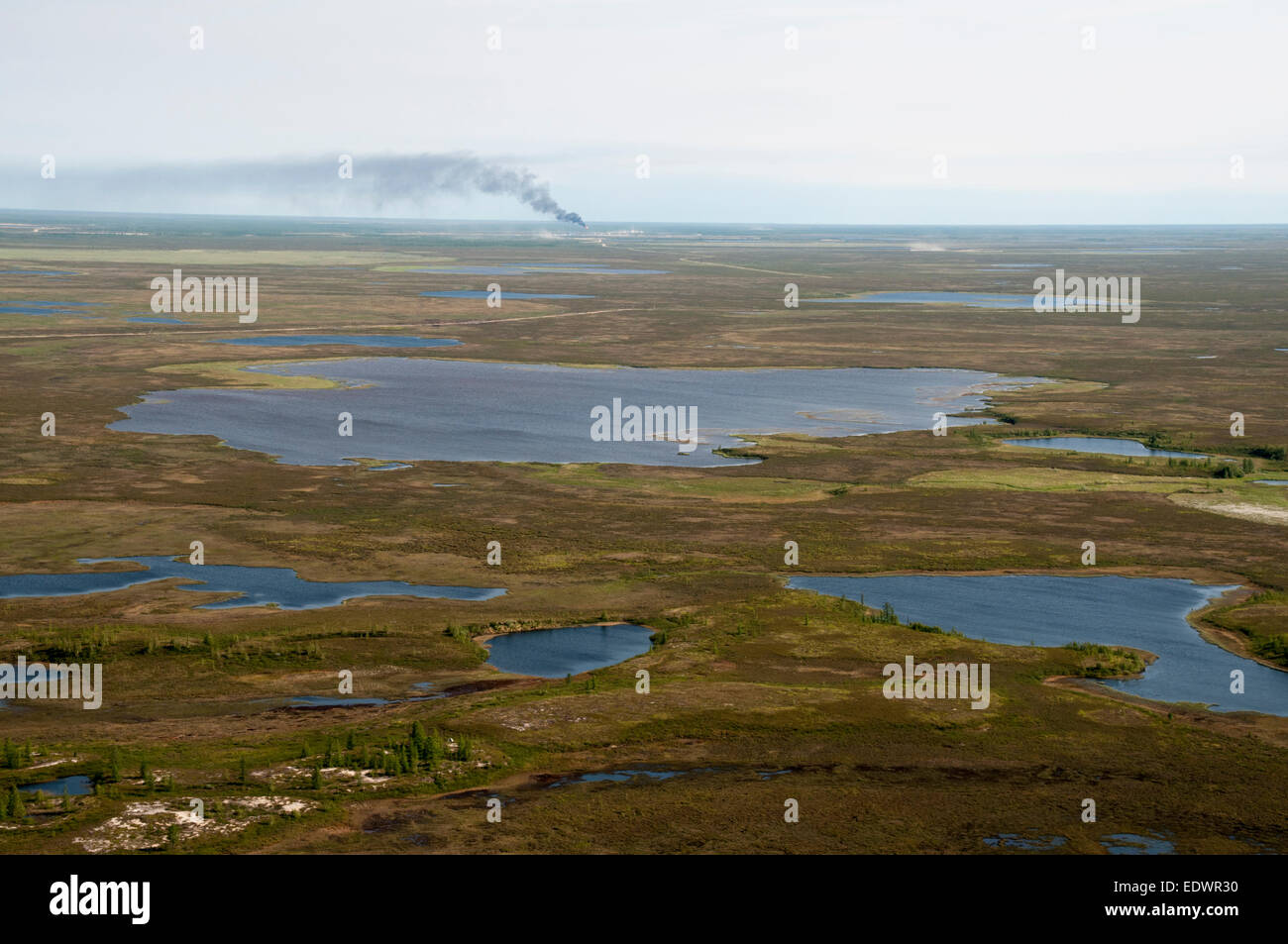 In the Russian tundra of Krasnoselkupsky district in northwest Siberia only some centimeter of permafrost is thawing - Stock Image