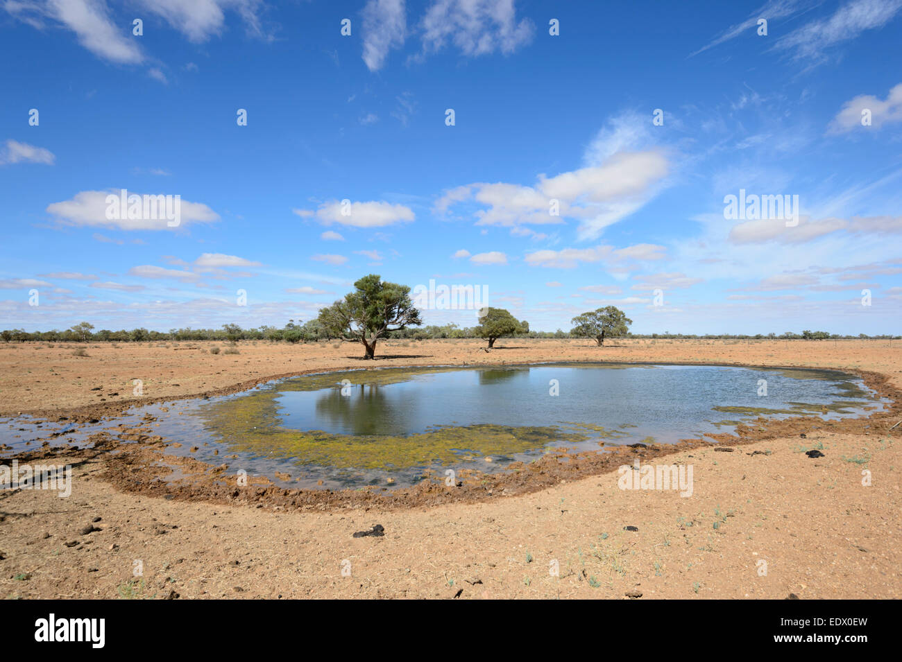 Slimy Watering Hole for Cattle along the Oodnadatta Track, South Australia, SA, Australia - Stock Image