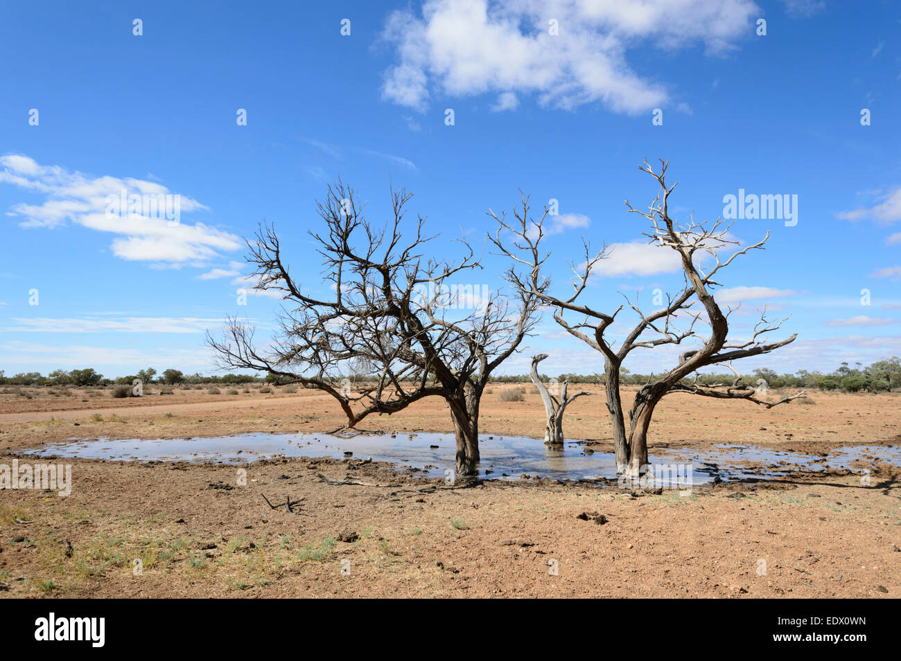 Slimy Watering Hole for Cattle along the Oodnadatta Track, South Australia Stock Photo