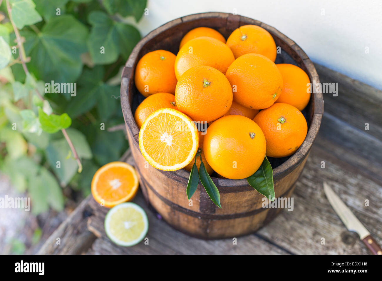 bucket of oranges on an old wooden bench against ivy covered white wall - Stock Image
