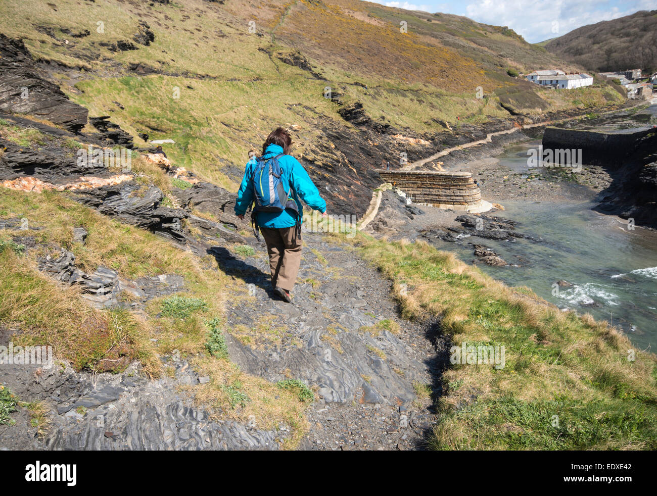 A woman walking along the South West Coast Path near Boscastle in north Cornwall, England, UK - Stock Image