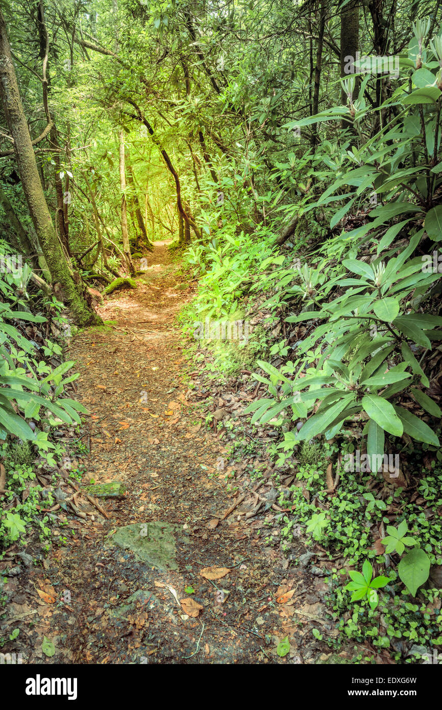 Sheltowee Trace trail in Kentucky. Daniel Boone National Forest - Stock Image