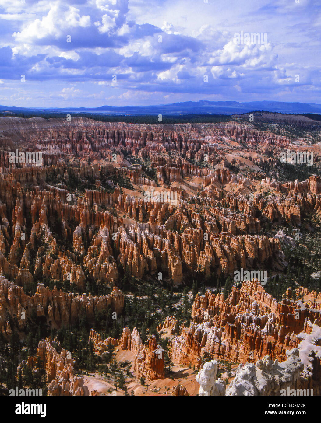 Amerika, USA, Landschaft im Bryce Nationalpark, America, landscape in Bryce National Park, Bryce National Park, - Stock Image