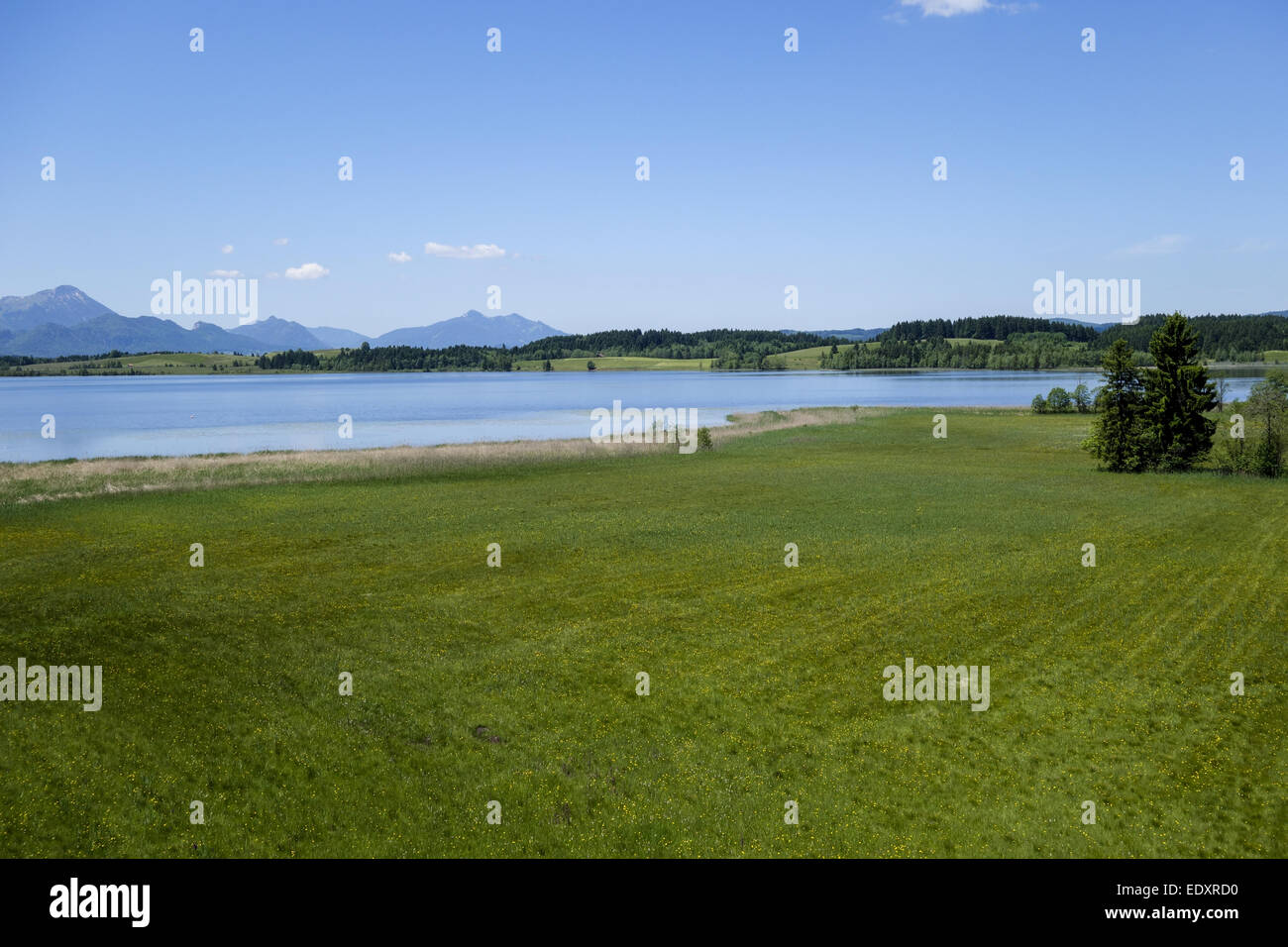 Blick auf den Bannwaldsee im Ostallgäu, Königswinkel, Tannheimer Alpen, Overlooking the Bannwaldsee in - Stock Image