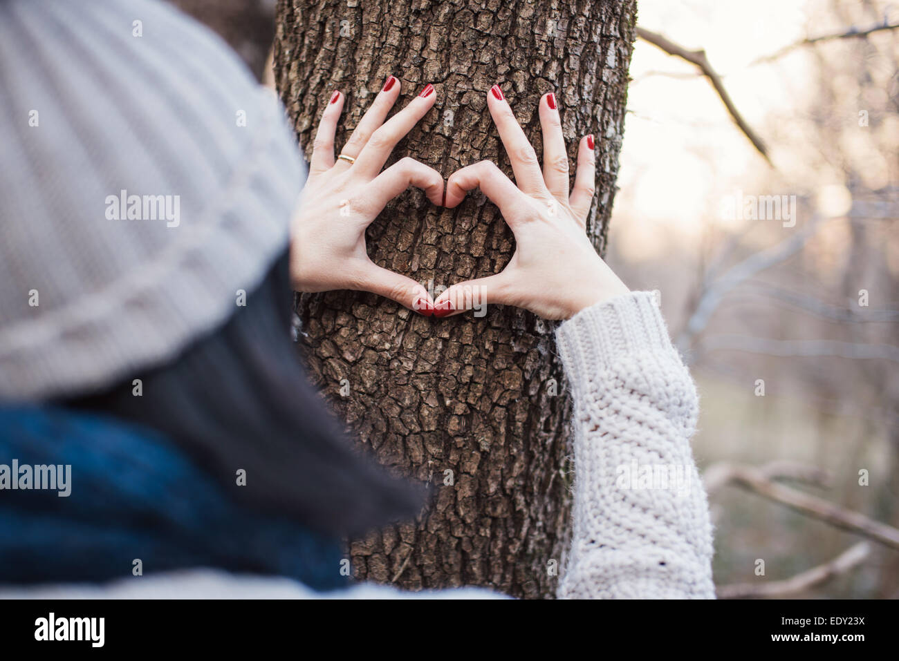 Hands making a heart shape on a tree trunk - Stock Image