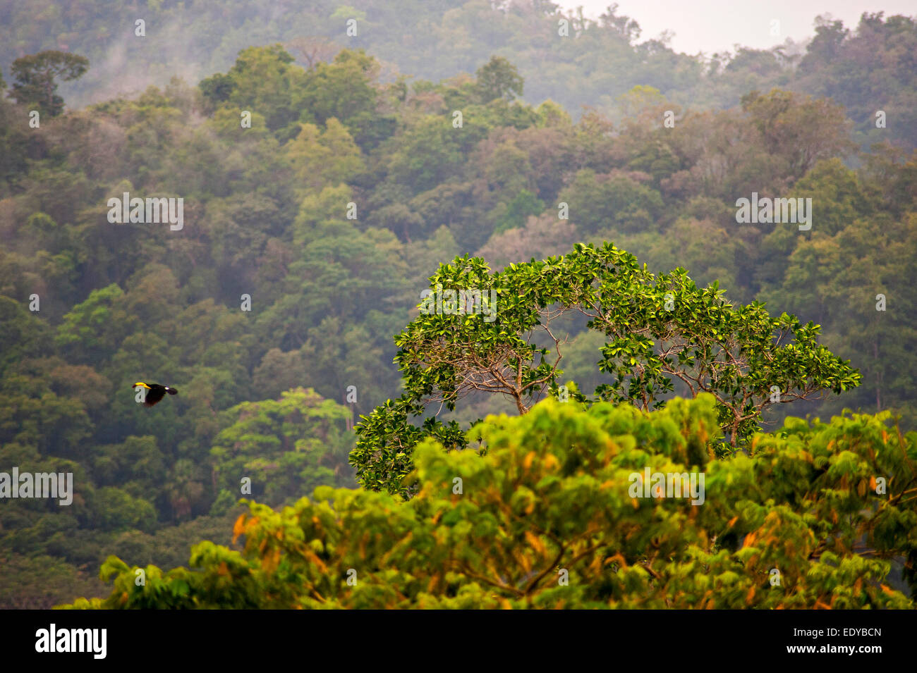 Rainforest of Belize at Belcampo Belize - Stock Image