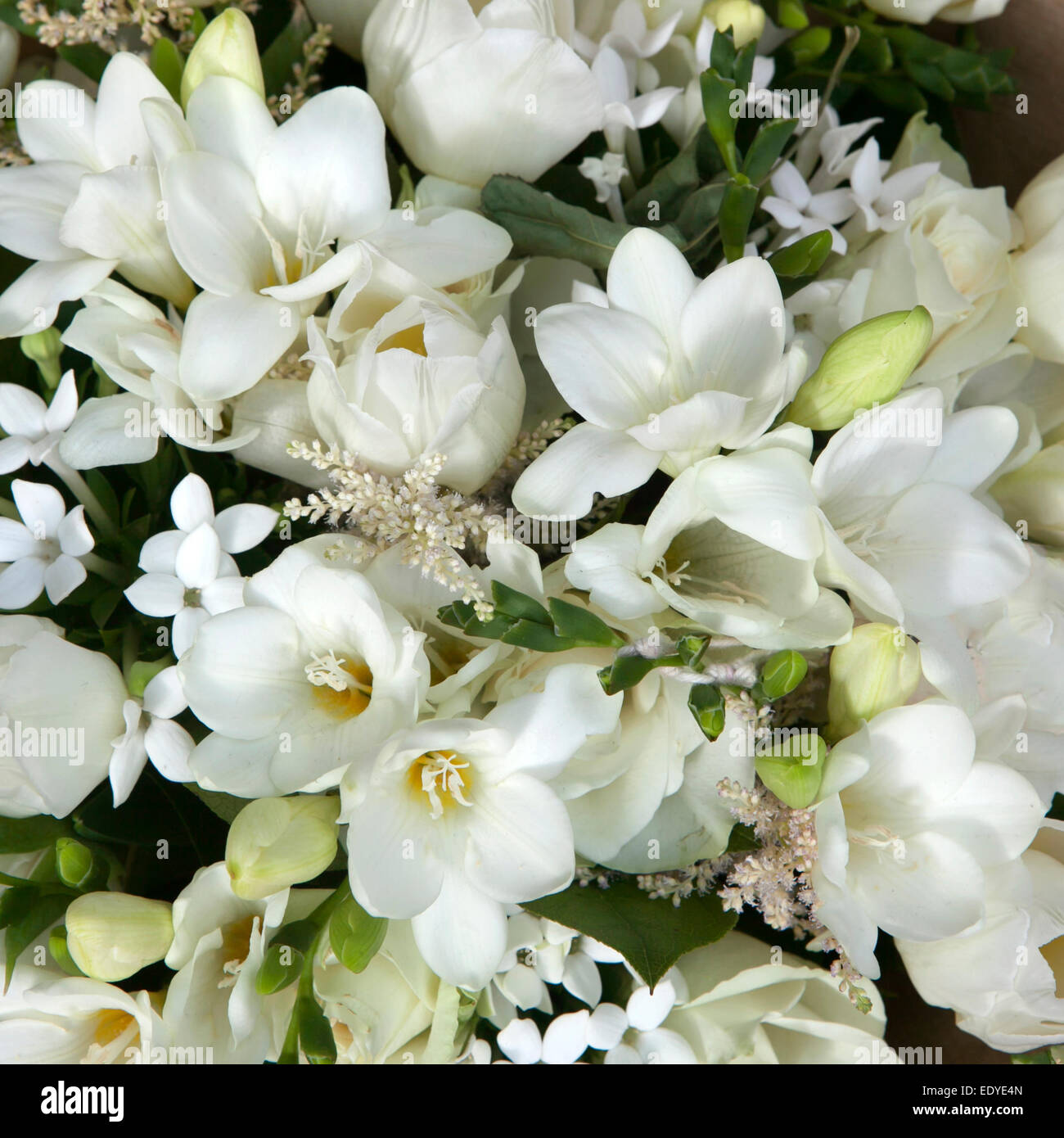 wedding bouquet of white flowers - anemone and tulip Stock Photo ...