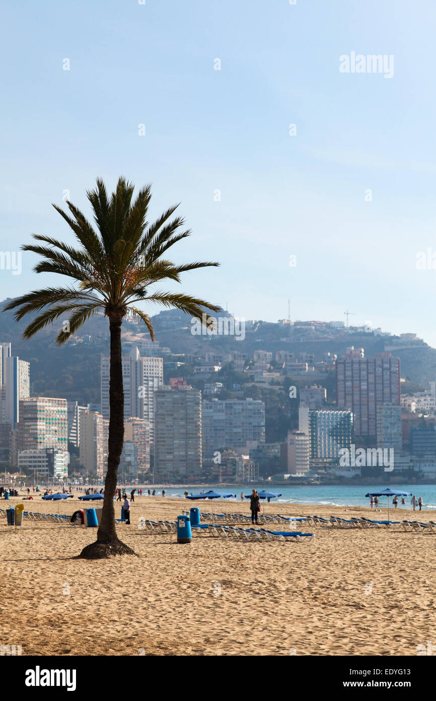 Beach scene in Benidorm, Spain with single palm tree on beach and tower blocks in background. - Stock Image