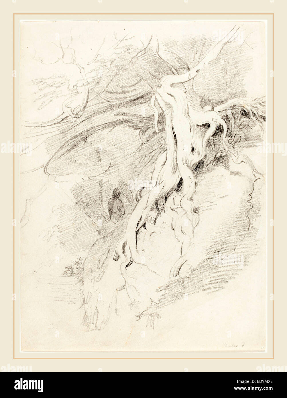 Thales Fielding, British (1793-1837), The Yew at Clifton, graphite on wove paper - Stock Image
