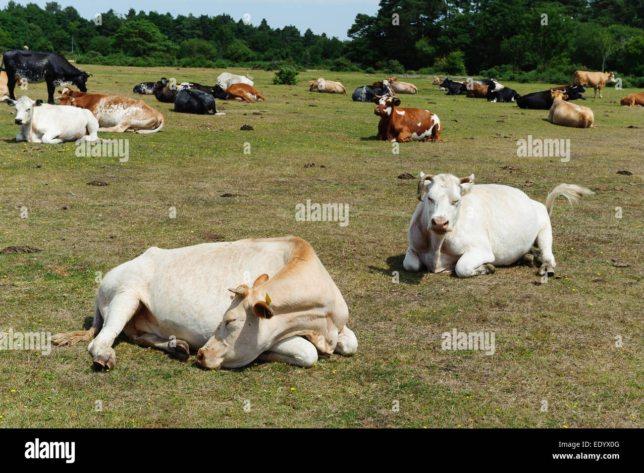 Extremely hot day in the New Forest - Stock Image