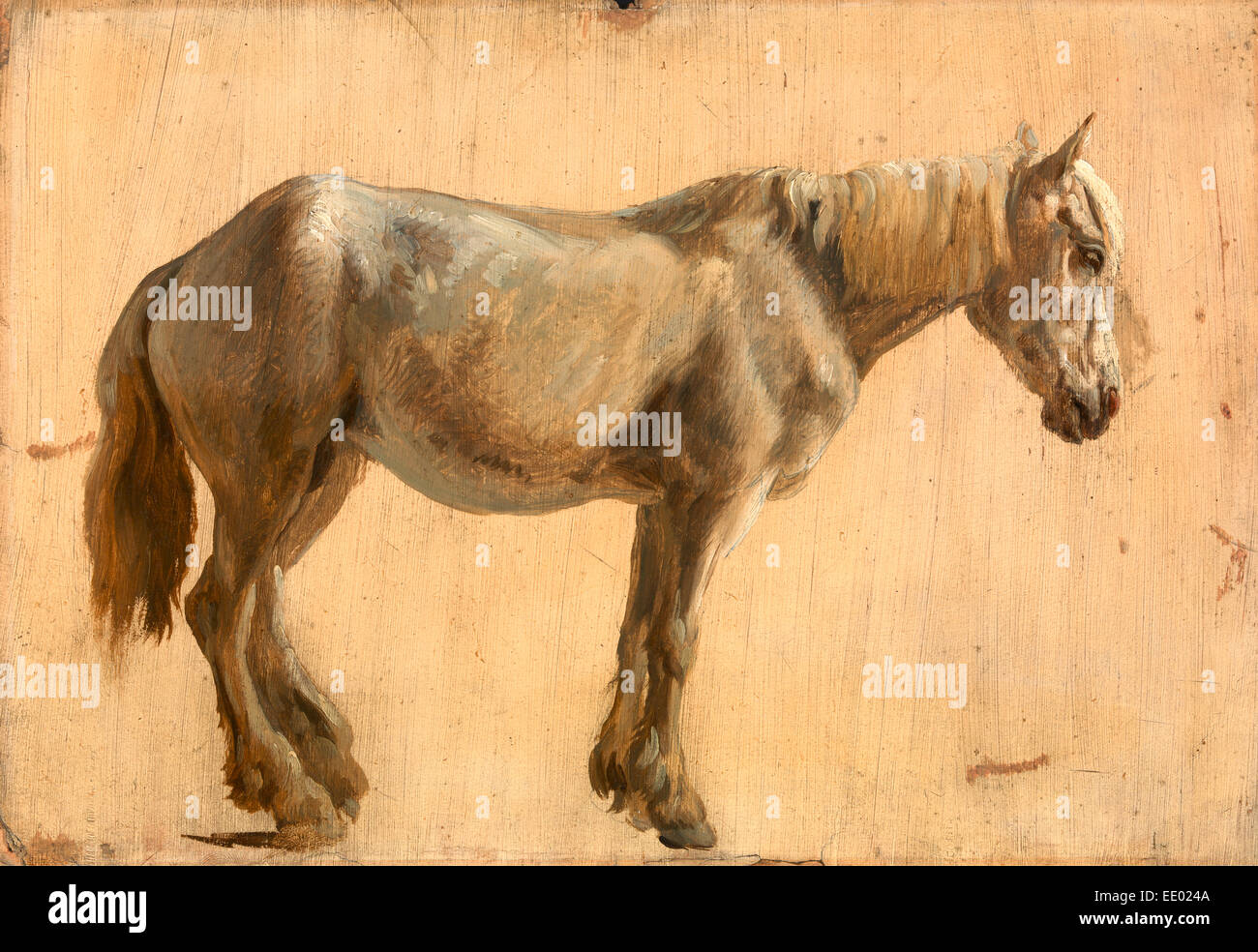 Study of a Grey Horse, Jacques-Laurent Agasse, 1767-1849, Swiss - Stock Image