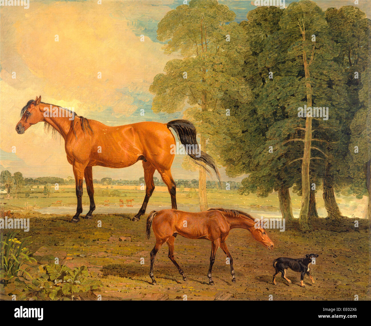 Broodmare with Foal, and a Terrier Broodmare with Foal and Terrier Near Newmarket: Broodmare with Foal and Terrier Stock Photo