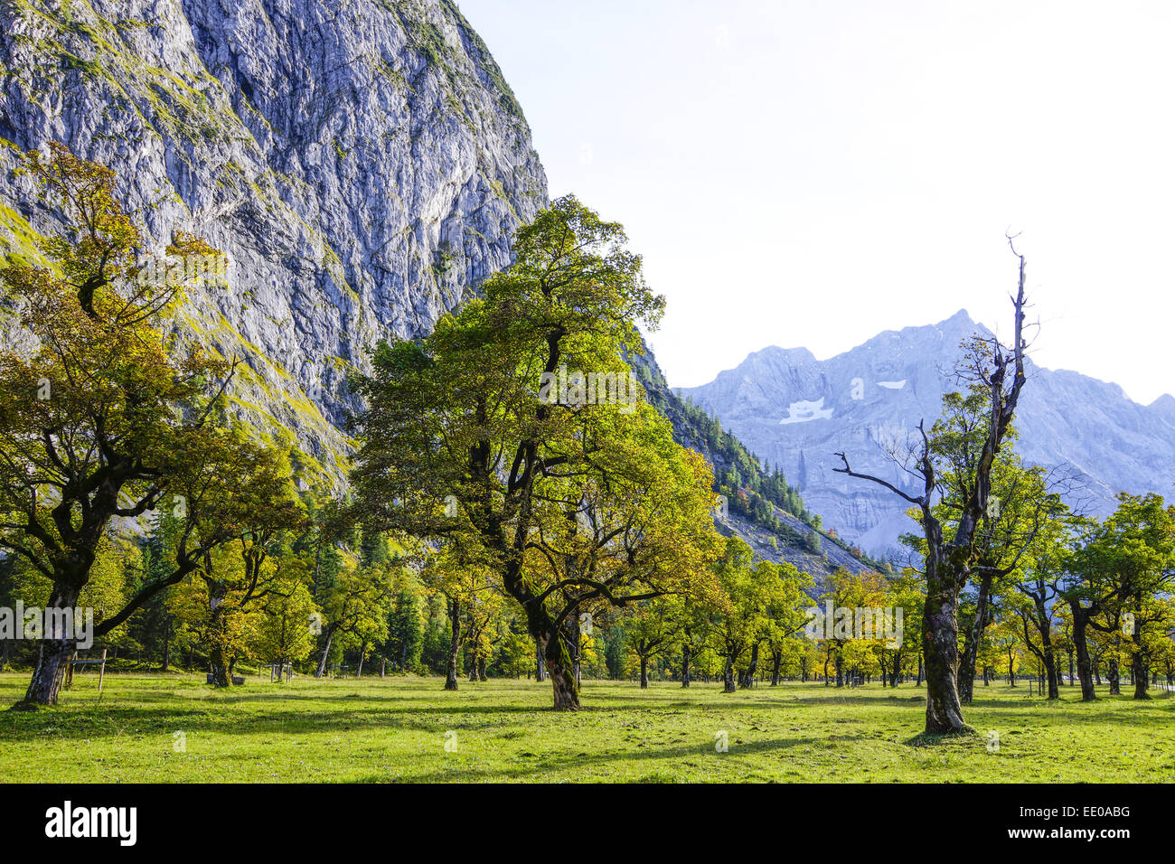 Grosser Ahornboden, Karwendelgebirge, Tirol, Österreich, Europa, Karwendel Mountains, Austria, Europe, , Tyrol, - Stock Image