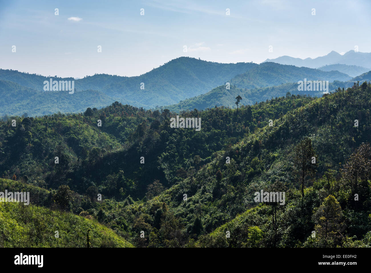 The green forest - Stock Image