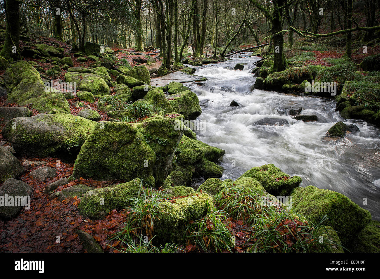 The River Fowey running through the Golitha Falls National Nature Reserve in Cornwall. - Stock Image