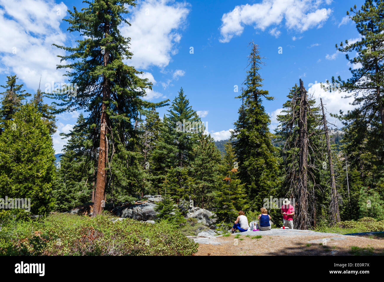 Visitors having a picnic near Redwood Mountain Overlook in Sequoia National Forest, Sierra Nevada, California, USA - Stock Image