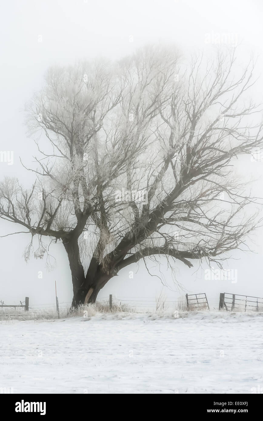 Tree, fence and field on a foggy day in Eastern Oregon. - Stock Image