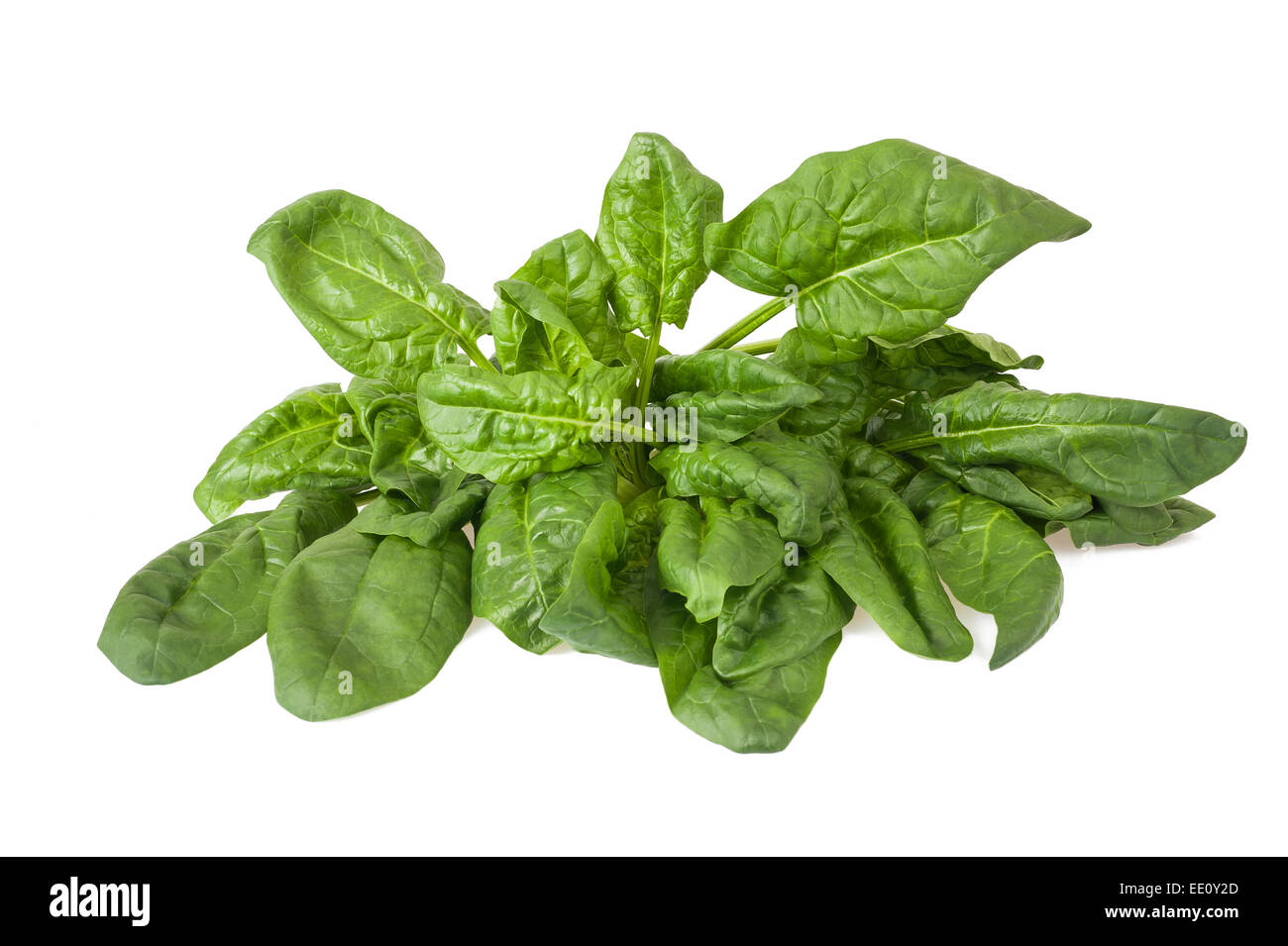 Fresh leaves spinach isolated on white background - Stock Image