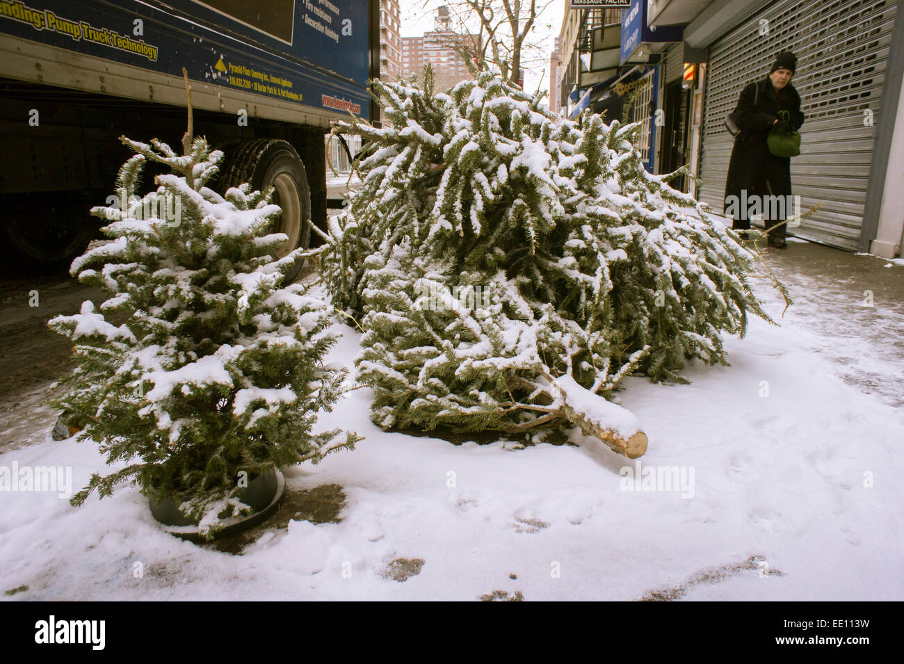 Discarded Christmas trees, properly devoid of tinsel and ornaments ...