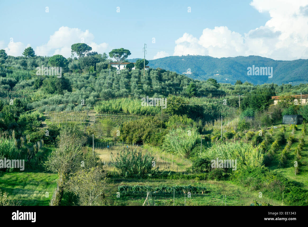 gently rolling rural Tuscan hill hills hillside with houses set amid olive groves vineyards & other lush green - Stock Image