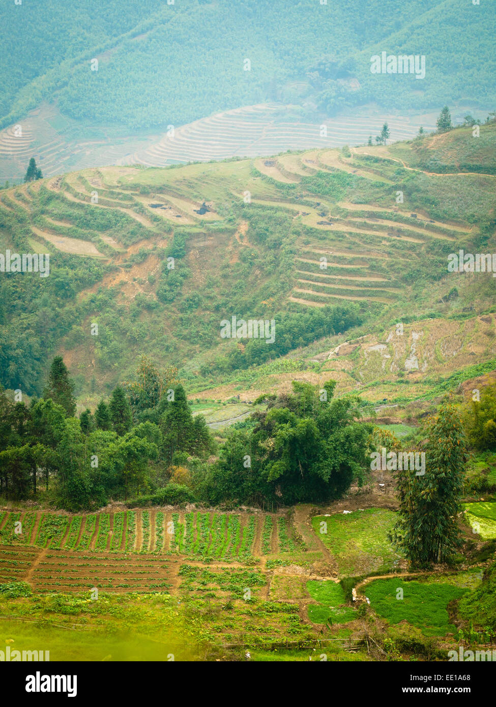 A view of fields and terraced rice paddies just outside of Sapa, Vietnam. - Stock Image