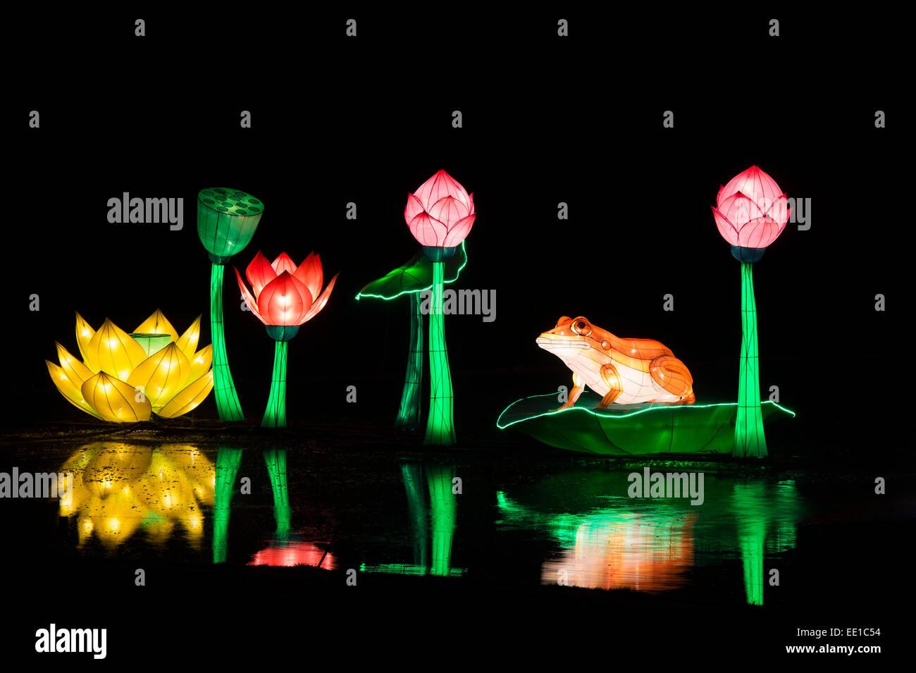 Frog and lotus flower chinese lanterns floating on the pond at stock frog and lotus flower chinese lanterns floating on the pond at longleat warminster wiltshire england izmirmasajfo