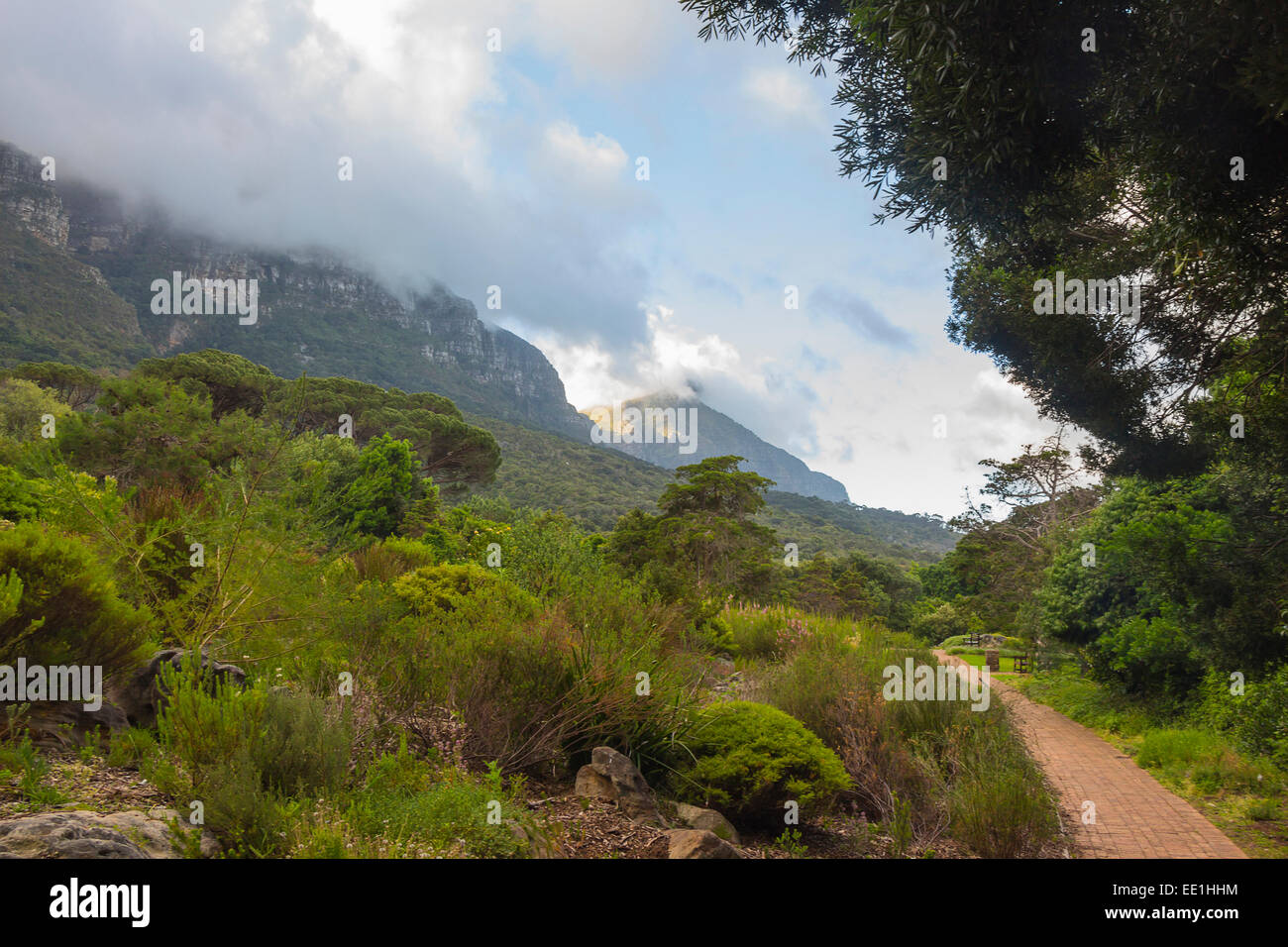 Kirstenbosch Gardens on a partly cloudy day with pathway - Stock Image