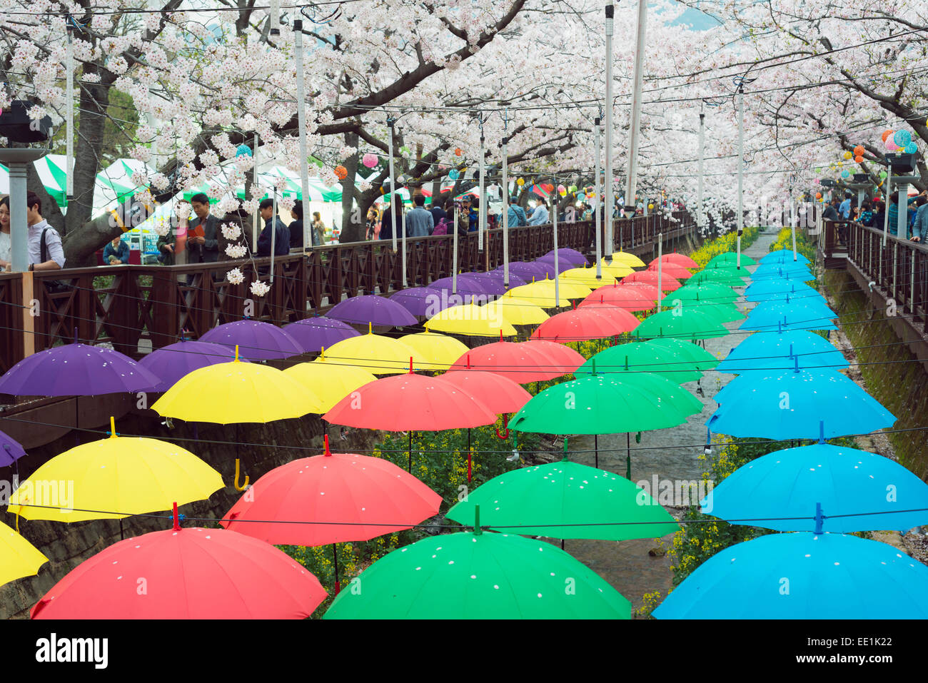 Spring cherry blossom festival, Jinhei, South Korea, Asia - Stock Image
