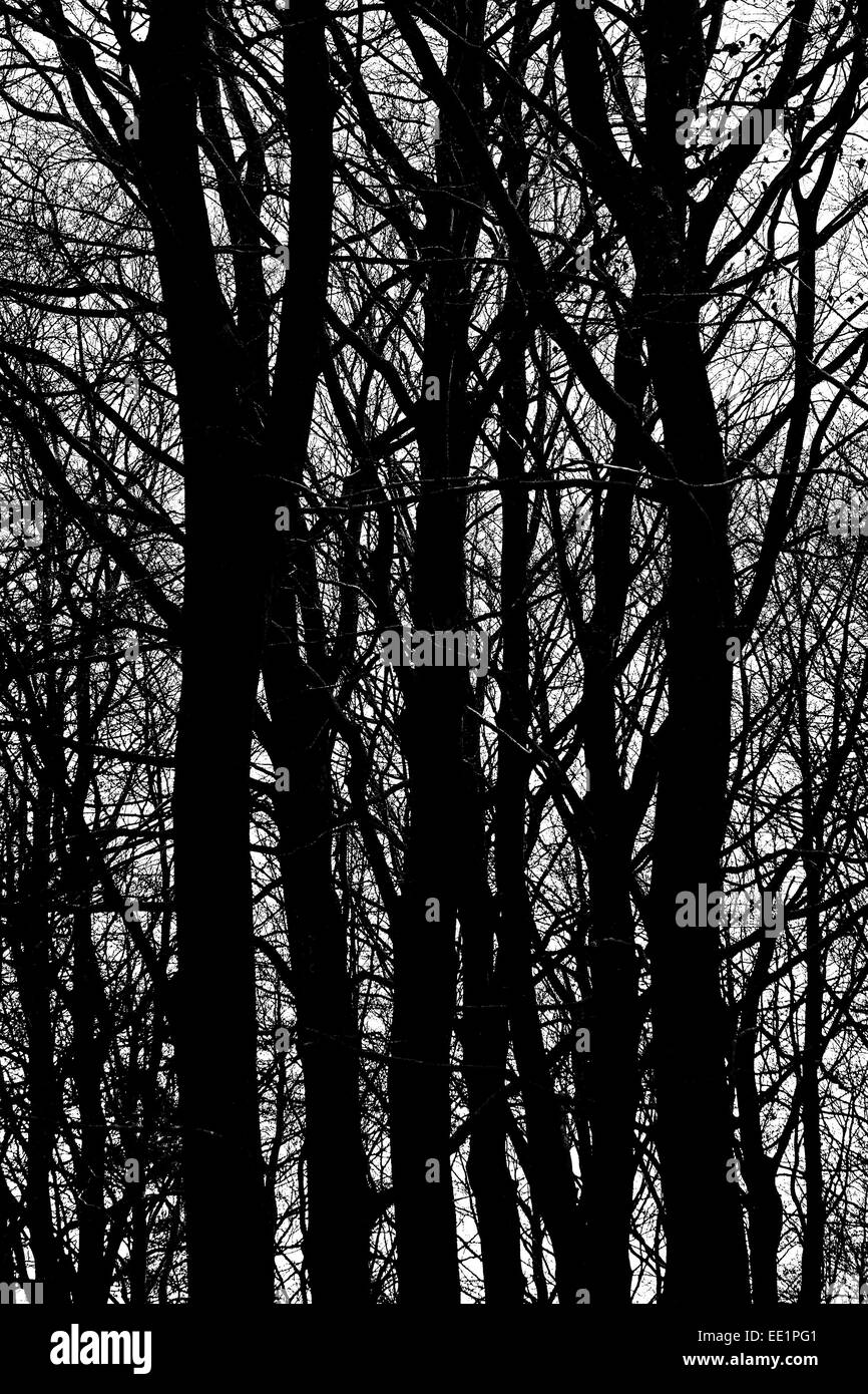 Trees in silhouette. - Stock Image