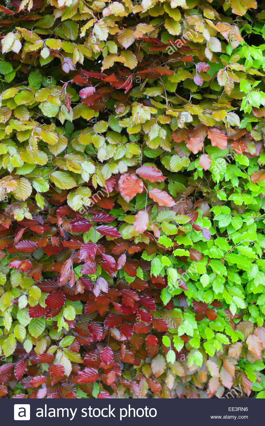 Tapestry Hedge Stock Photos & Tapestry Hedge Stock Images