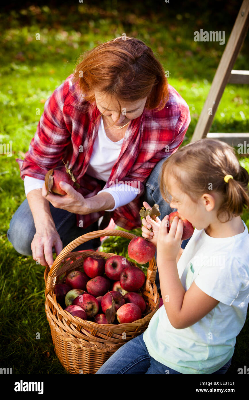 Grandmother and granddaughter picking apples, Munich, Bavaria, Germany Stock Photo