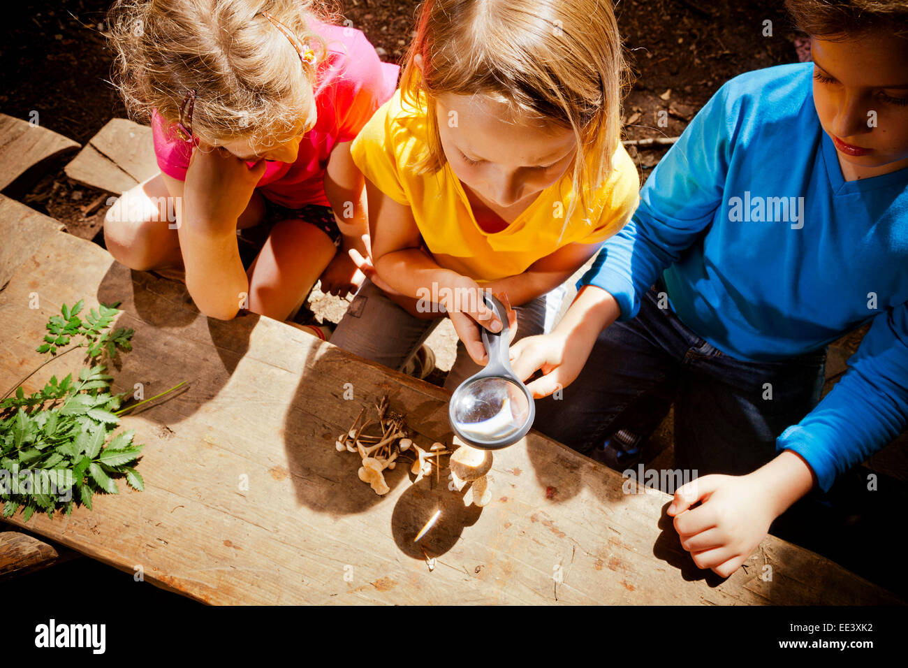 Children learning in a forest camp, Munich, Bavaria, Germany - Stock Image