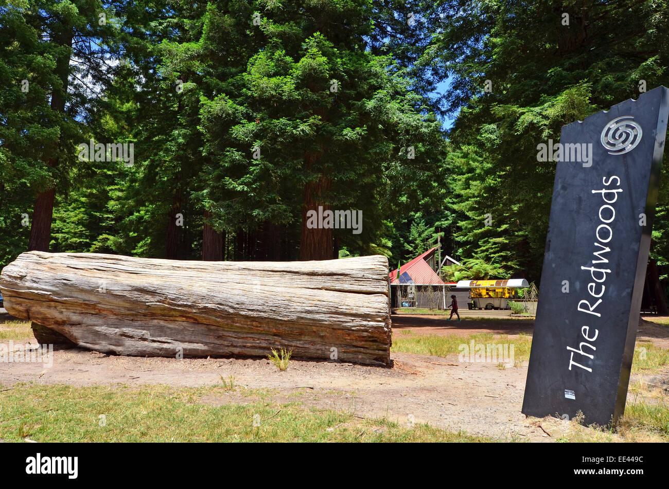 ROTORUA, NZL - JAN 12 2015:The entrance to Redwoods – Whakarewarewa Forest in Rotorua, New Zealand.It's an exsotic - Stock Image