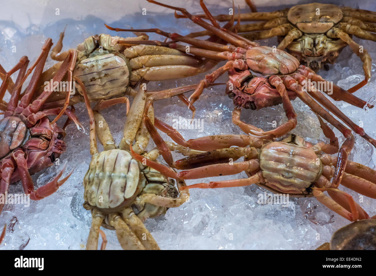 Fresh crabs at Tsukiji fish market, Tokyo, Japan - Stock Image