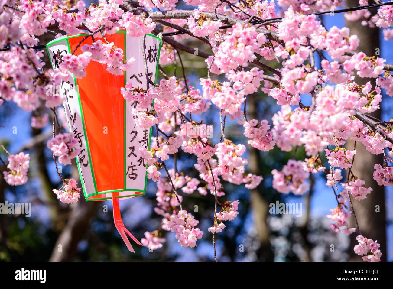 Tokyo, Japan springtime at Ueno Park. - Stock Image