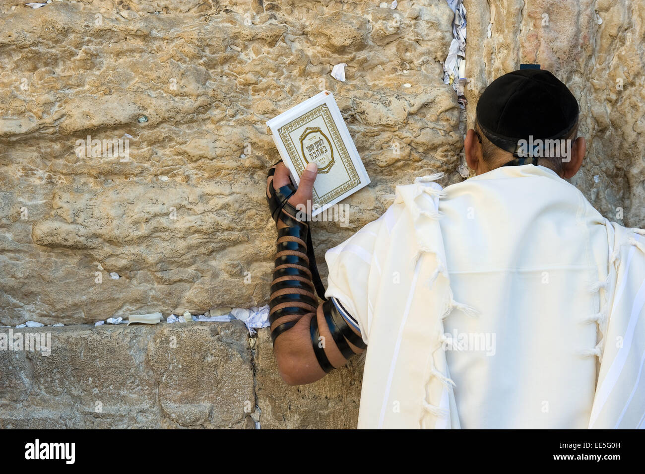 A jewish man with the torah in his hand and tefillin around his arm is praying against the western wall - Stock Image