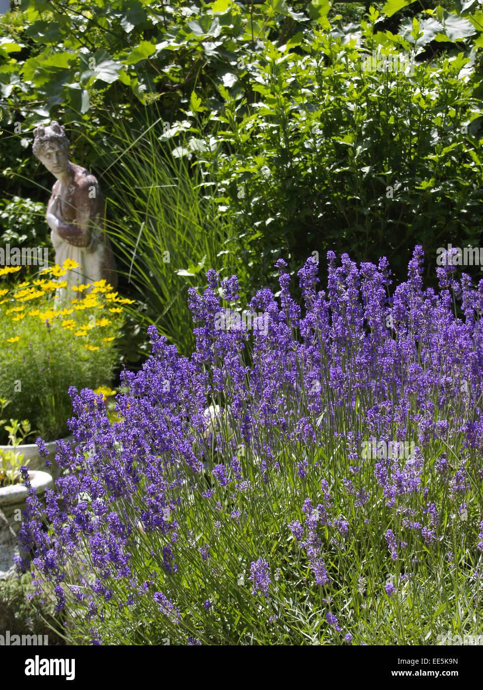 Aroma Blume Blumen Blumengarten Blueten Duft Feld Garten