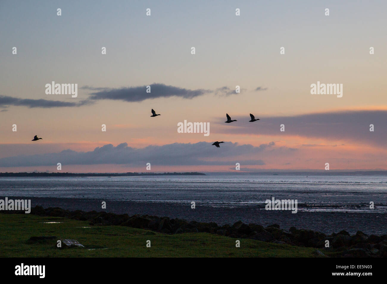 Bristol Channel, near St Brides on the Gwent Levels, Wales, UK. 14th January, 2015. UK Weather: The sun rises behind - Stock Image