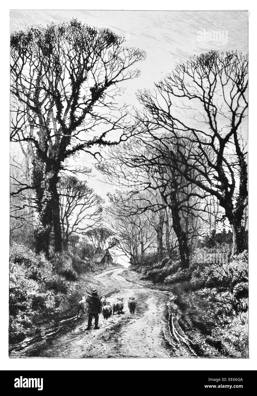 Frederick Albert Slocombe A Middlesex Lane country shepherd sheep lamb winter farmer farm cottage forest - Stock Image