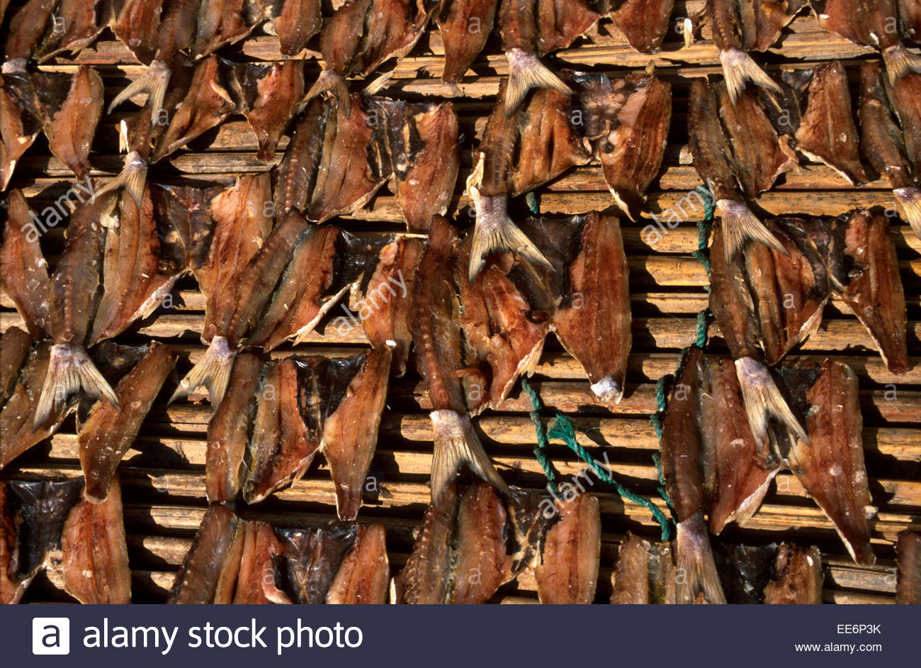 Mexcaltitan, fish drying in the sun - Stock Image