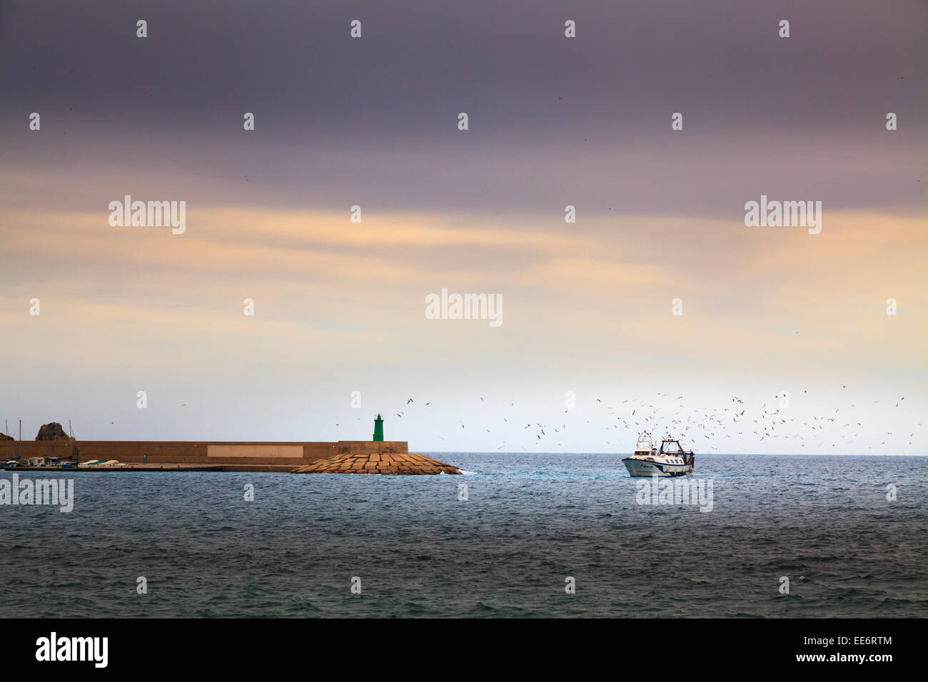Fishing trawler returning to Javea harbour at the end of the day surrounded by sea birds - Stock Image