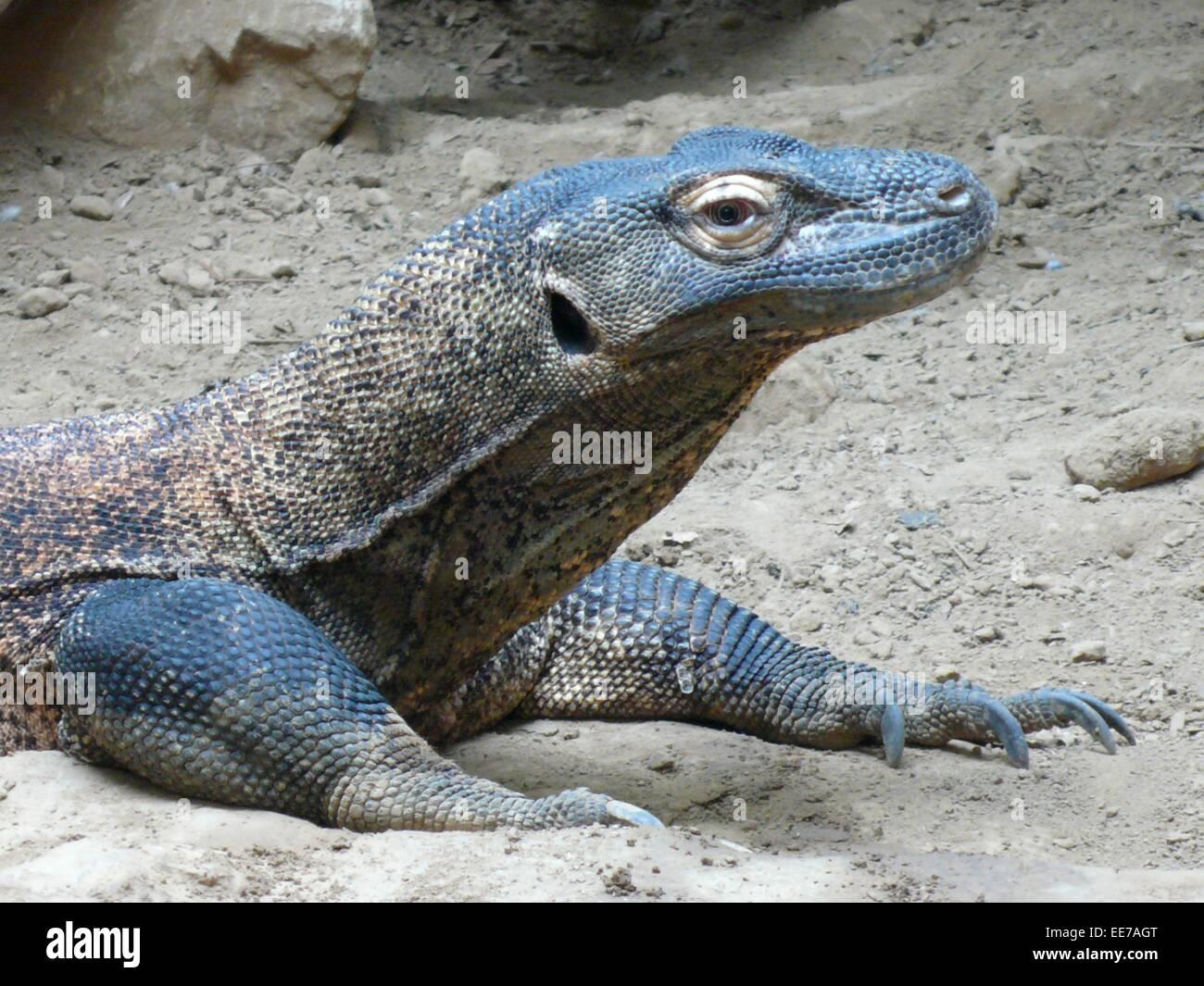 Crocodile Monitor Stock Photos & Crocodile Monitor Stock Images - Alamy
