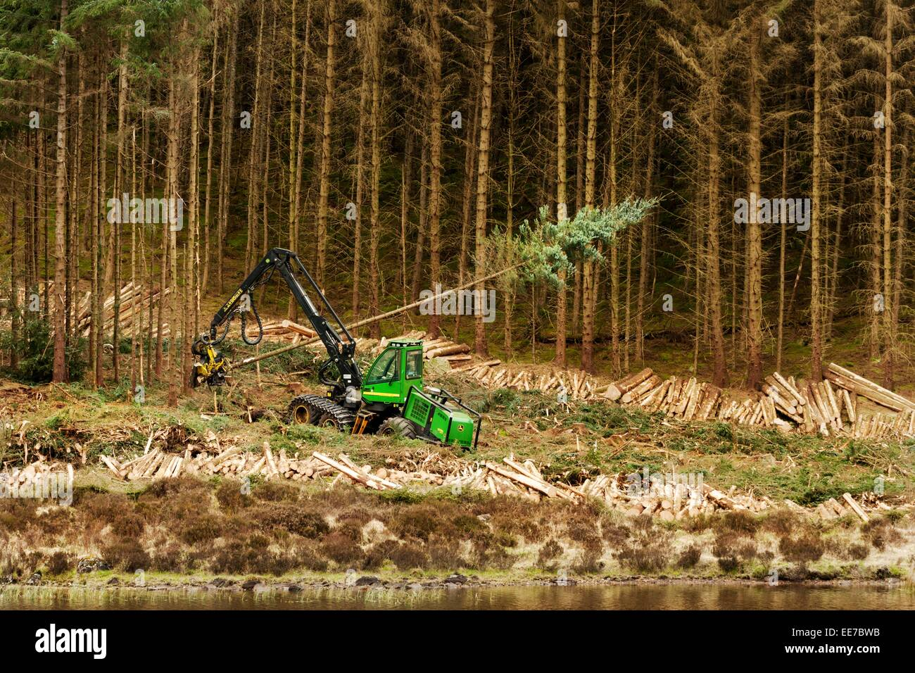John Deere 1270D Harvester felling timber in a forest in western Scotland.  An example of machinery for harvesting - Stock Image