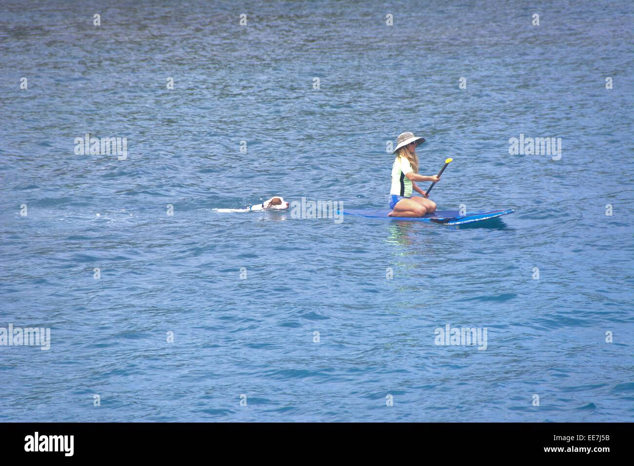 Dog swimming after paddle boarder Stock Photo