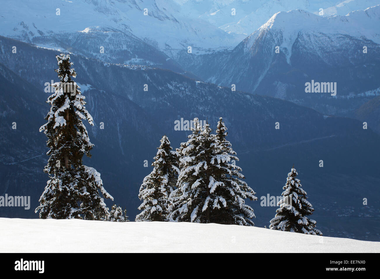 Mountains seen from Riederalp and snow covered spruce trees in winter in the Swiss Alps, Wallis / Valais, Switzerland - Stock Image